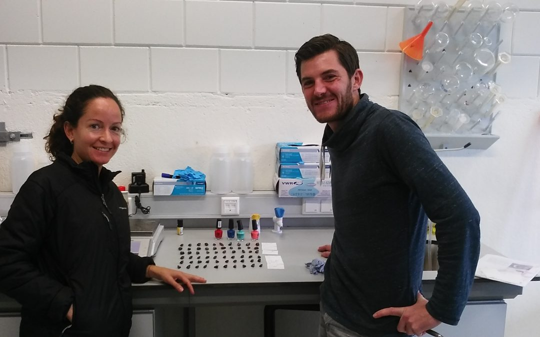 First data on mussel experiments